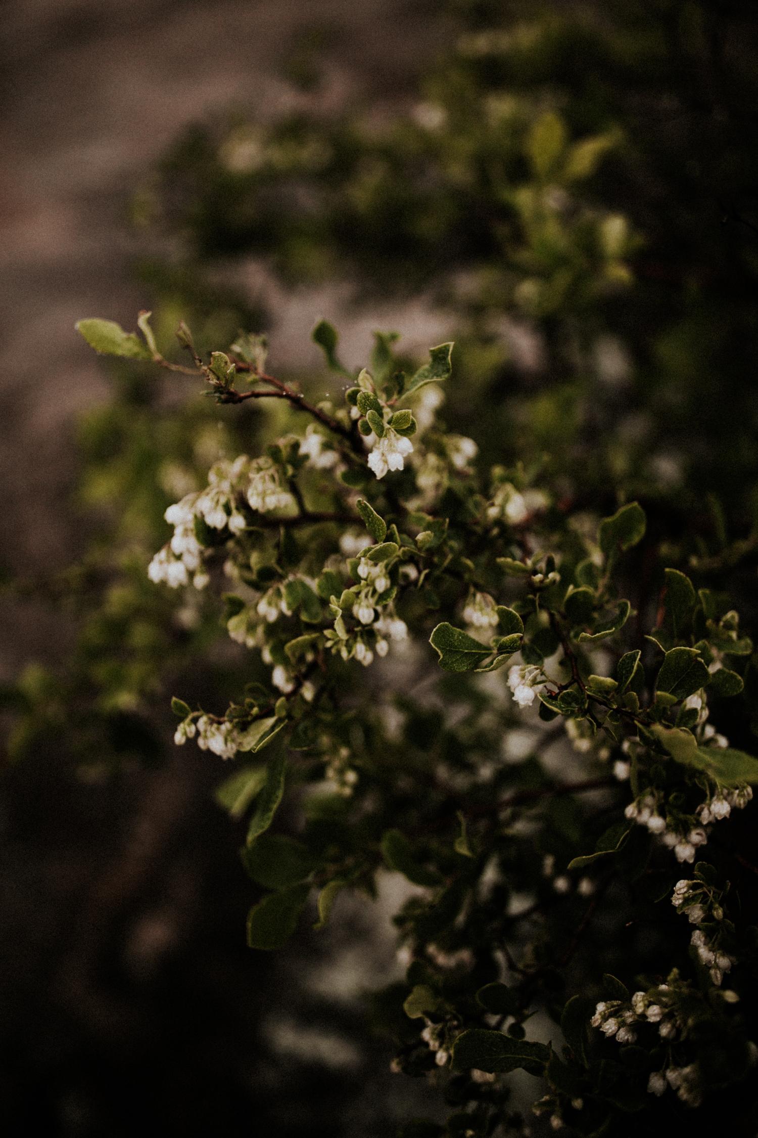 california+wedding+photographer-9825